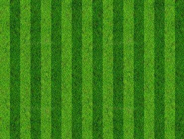 Grass sports field 01