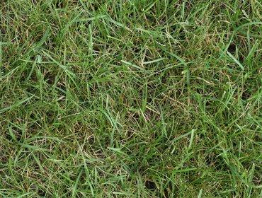 Erba prato grass lawn 02