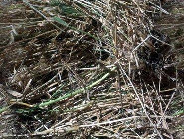 Erba prato grass lawn 03