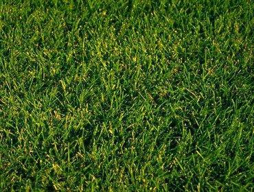 Erba prato grass lawn 05