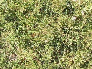 Erba prato grass lawn 07