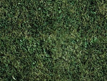 Erba prato grass lawn 09