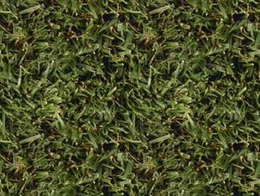 Erba prato grass lawn 10