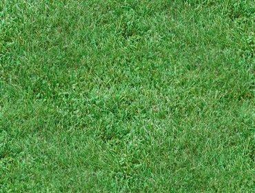 Erba prato grass lawn 100
