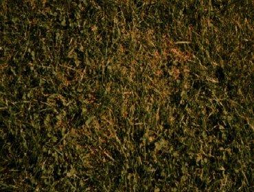 Erba prato grass lawn 102