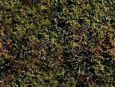 Erba prato grass lawn 104
