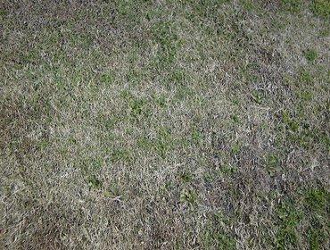 Erba prato grass lawn 106
