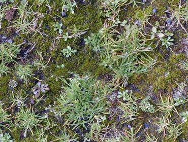 Erba prato grass lawn 107