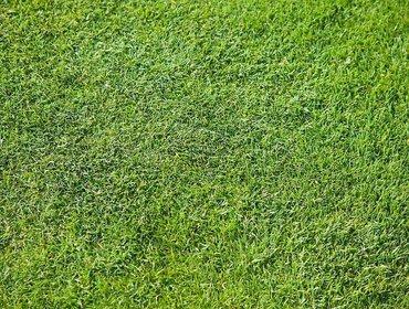 Erba prato grass lawn 114