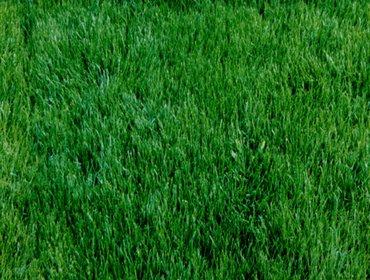 Erba prato grass lawn 12