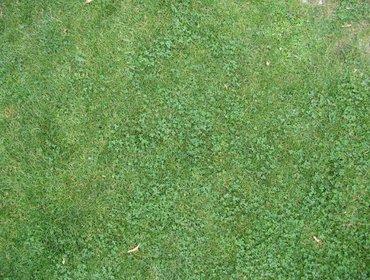 Erba prato grass lawn 120