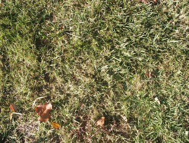 Erba prato grass lawn 122