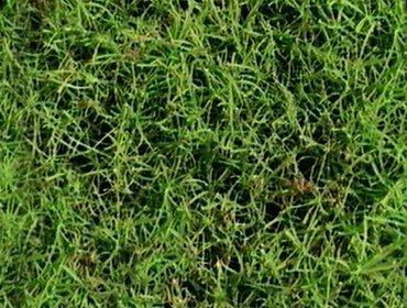 Erba prato grass lawn 123