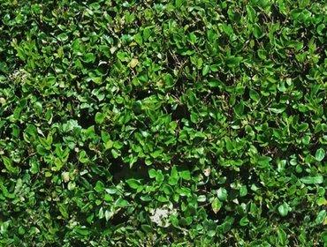Erba prato grass lawn 124