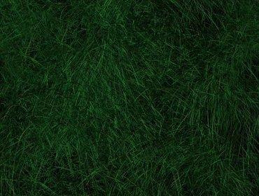 Erba prato grass lawn 127
