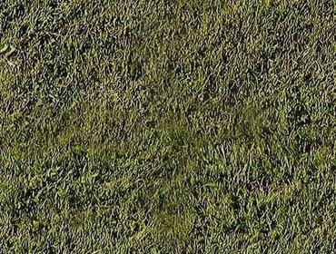 Erba prato grass lawn 128