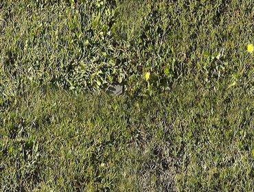 Erba prato grass lawn 129