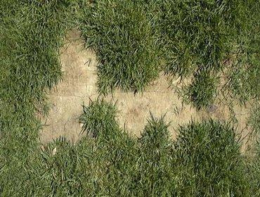 Erba prato grass lawn 130