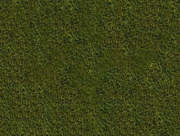 Erba prato grass lawn 131