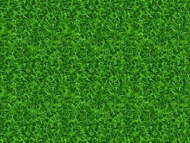 Erba prato grass lawn 133