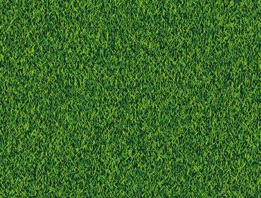 Erba prato grass lawn 134