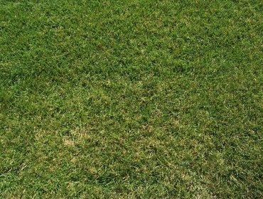 Erba prato grass lawn 135