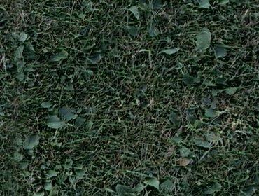 Erba prato grass lawn 137