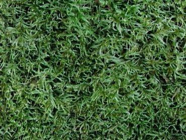 Erba prato grass lawn 138