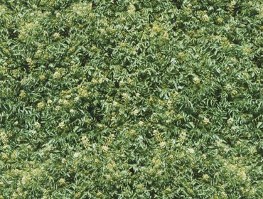 Erba prato grass lawn 139
