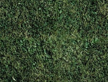 Erba prato grass lawn 140
