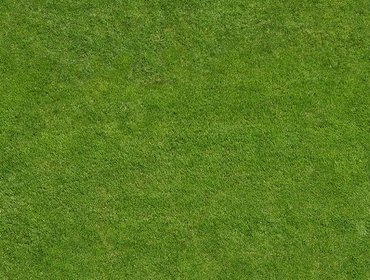 Erba prato grass lawn 142