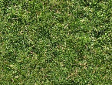 Erba prato grass lawn 145