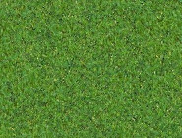 Erba prato grass lawn 147