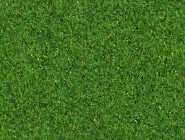 Erba prato grass lawn 149