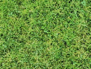 Erba prato grass lawn 152