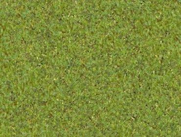Erba prato grass lawn 153