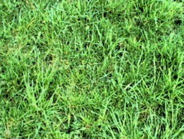 Erba prato grass lawn 154