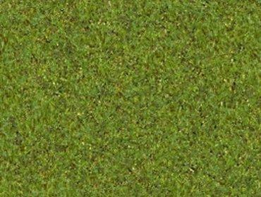 Erba prato grass lawn 155