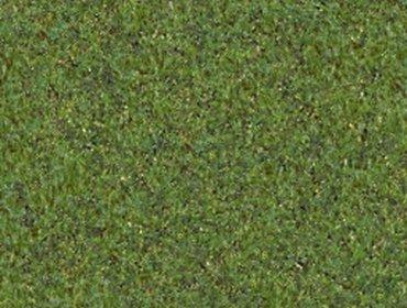 Erba prato grass lawn 157