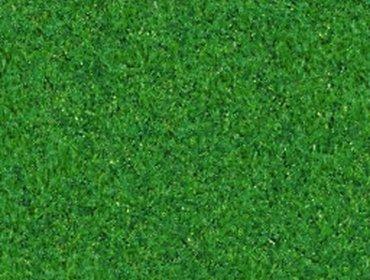 Erba prato grass lawn 158