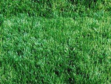 Erba prato grass lawn 159