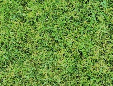 Erba prato grass lawn 16