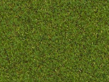 Erba prato grass lawn 161