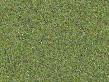 Erba prato grass lawn 163