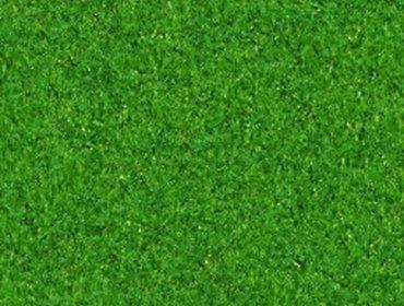 Erba prato grass lawn 165