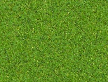 Erba prato grass lawn 168