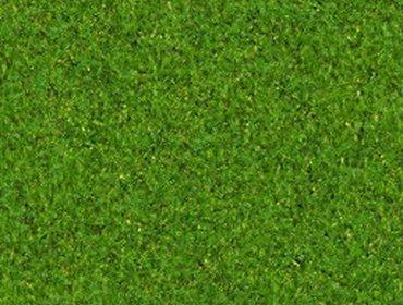 Erba prato grass lawn 169