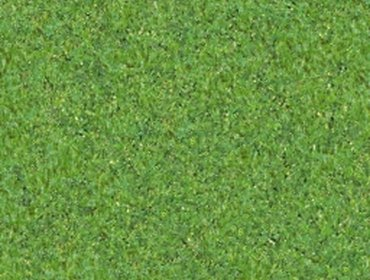 Erba prato grass lawn 170