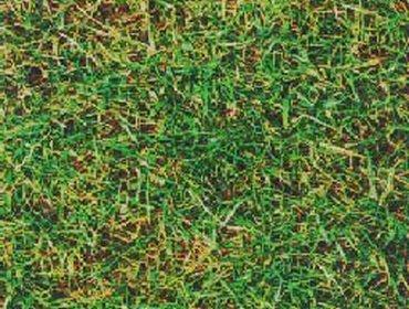 Erba prato grass lawn 172