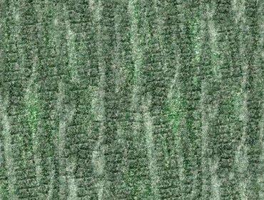 Erba prato grass lawn 174